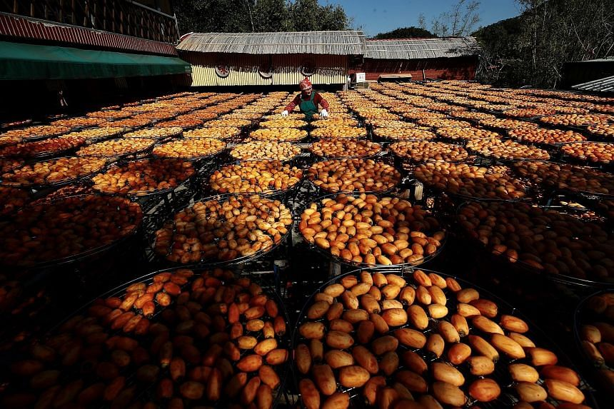 180-YEAR-OLD PRACTICE: Taiwanese farmers drying persimmons under the sun (above). The farm in Hsinchu County in Taiwan chooses to dehydrate the fruit the traditional way. For 180 years, its workers have been peeling the fruit by hand, eschewing machi
