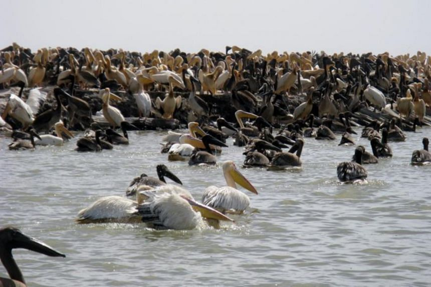 A patrol in the Djoudj National Bird Sanctuary found at least 750 pelicans dead on Jan 23, 2021.