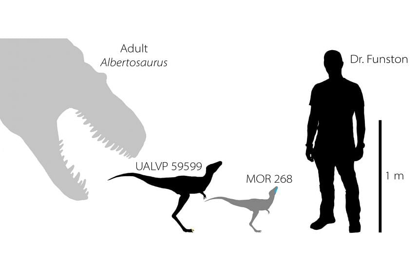 An illustration shows the silhouettes of two baby tyrannosaurs from the Cretaceous Period of North America.