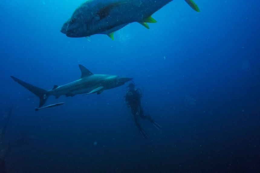 Dramatic shark decline leaves 'gaping hole' in ocean
