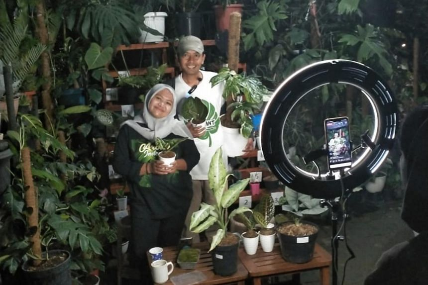 Live plant auctions being held at one of Sindo Plant Singapore's suppliers' farms in East Java, Indonesia.