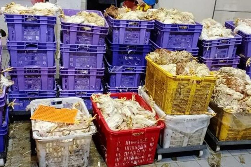 The chickens died from the heat and the crammed conditions of their transport, say poultry importers.