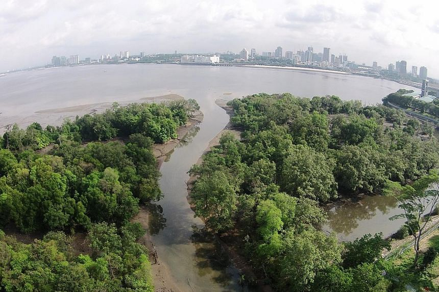 Some sites have been retained as green spaces, even after initially being designated for other uses, such as the Mandai Mangrove and Mudflat, which was eventually kept as a nature park, said National Development Minister Desmond Lee.