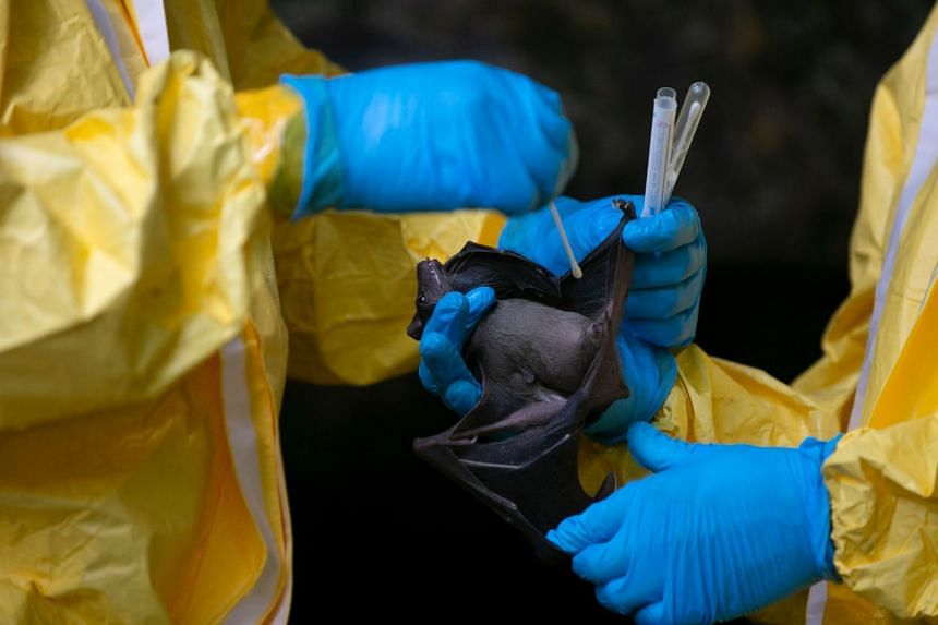 The virus is thought to have originated in bats in South-east Asia.