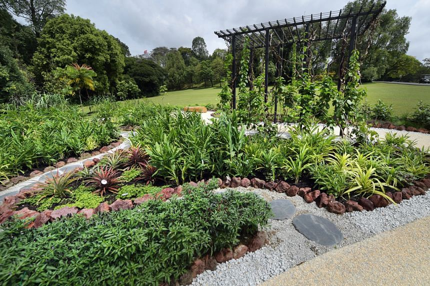 A deliberate effort was made to select plants that will educate the public on local herbs and spices, as well as plants that will stimulate the senses.