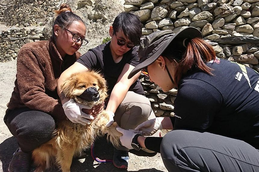 Research assistants from the Himalayan Mutt Project - started by wildlife disease ecologist Debby Ng - collecting blood from a villager's dog for a study looking at dog-borne pathogens in Nepal's Annapurna Conservation Area.