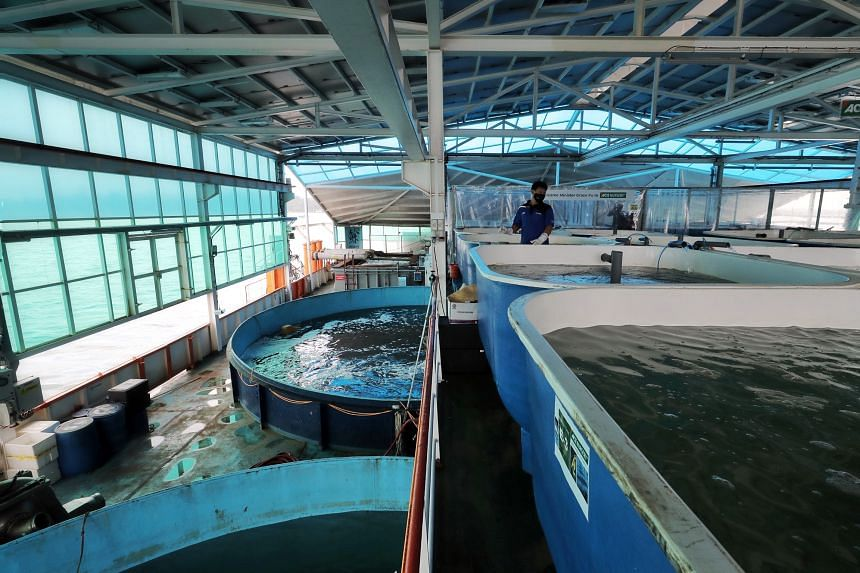Eco-Ark is a floating fish farm built with funding support from the Agriculture Productivity Fund.