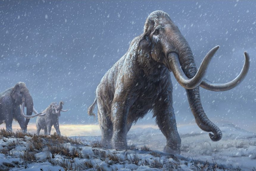 An artist's reconstruction shows the extinct steppe mammoth, an evolutionary predecessor to the woolly mammoth.