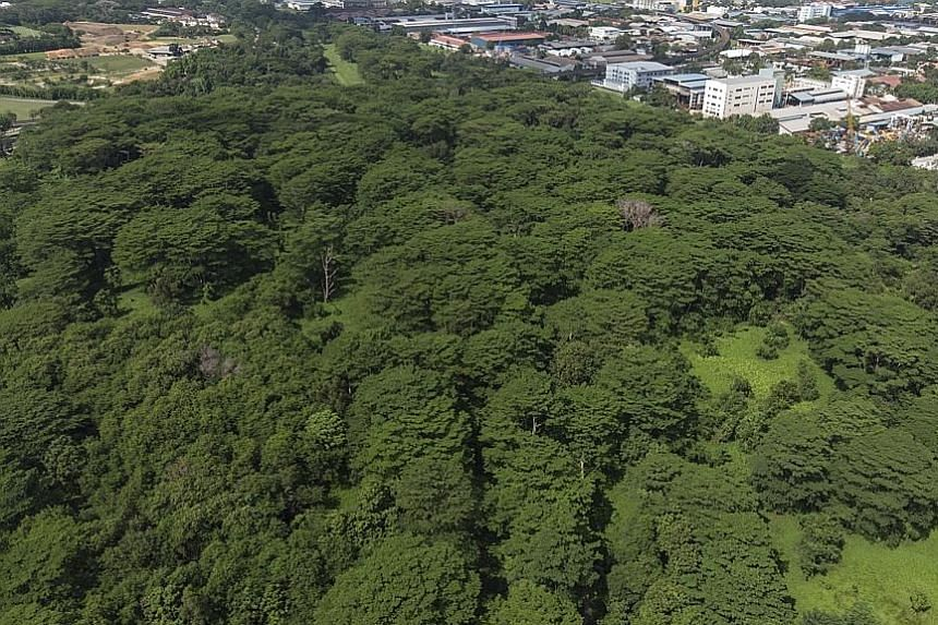 Aerial photos of the Kranji woodland area taken in May 2019 (left) and this month, which shows just a narrow strip of trees near the rail corridor, with much of the site cleared, to the consternation of nature groups. Two plots of forested land that