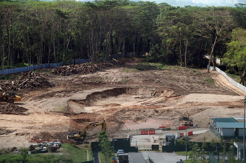 Two plots of forested land that was cleared at Kranji Road.