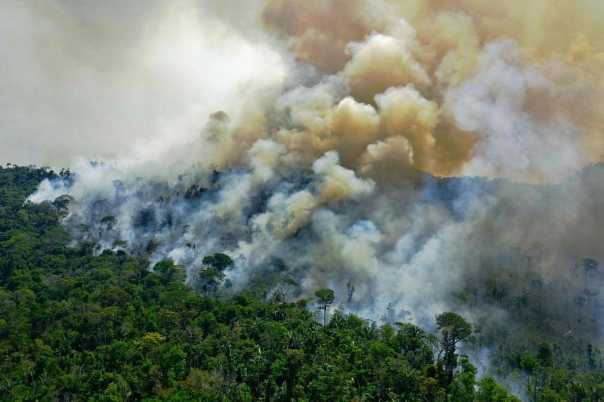 An August 2020 photo shows a burnt area of Amazon rainforest reserve, south of Novo Progresso in Para State, Brazil.