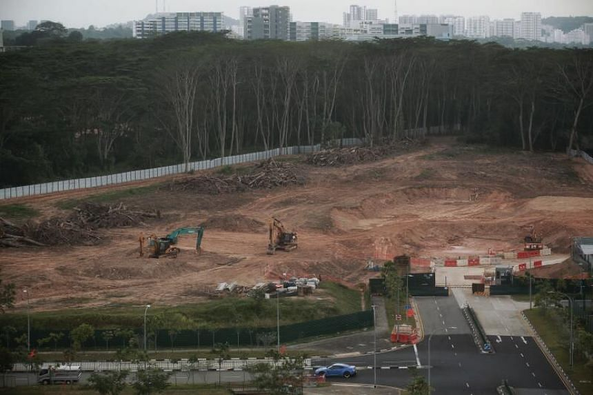 One of two plots of forested land cleared at Kranji Road, as seen on Feb 22, 2021.