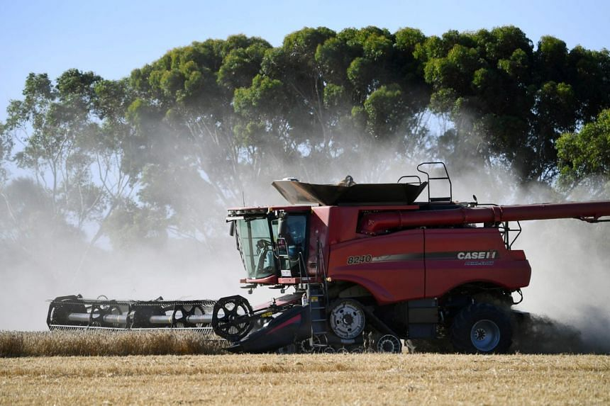 The forecast is a boost to Australian wheat farmers who will sow crops in April.