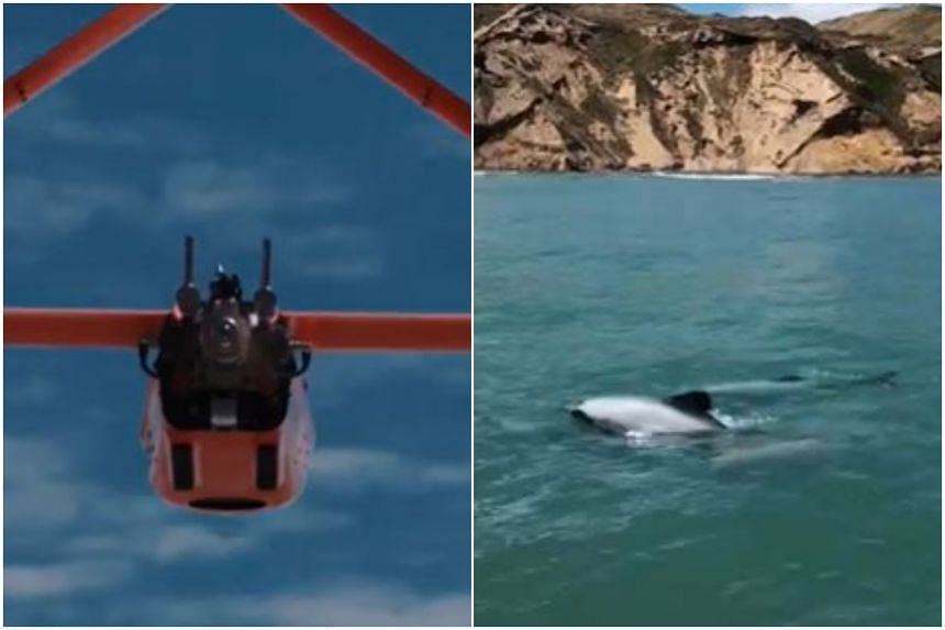 The drone ensures dolphins remain undisturbed as they fly at an altitude of over 120 metres.
