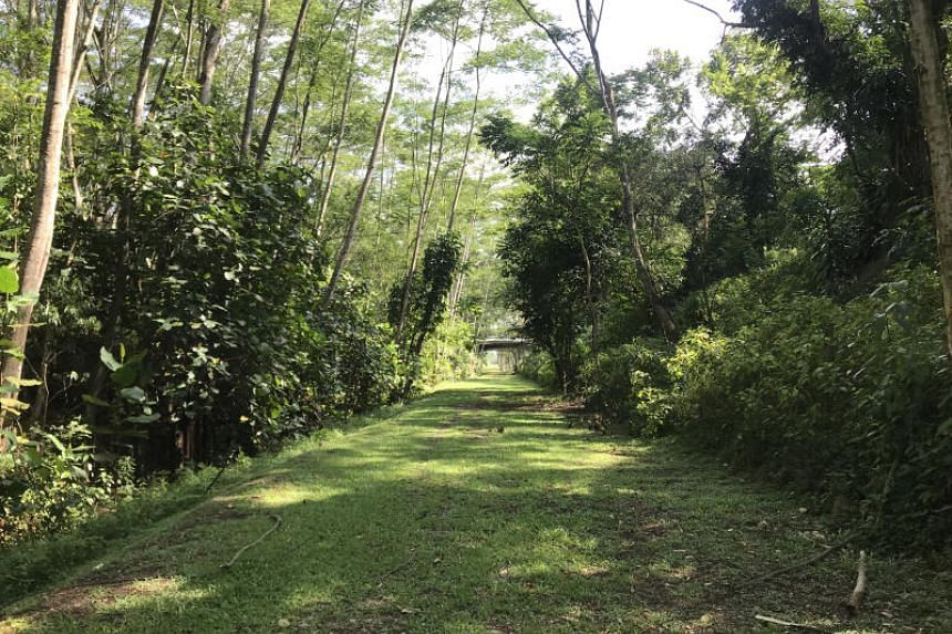 The Kranji woodland is a young stand of fast-growing, non-native trees that started growing about a decade ago.