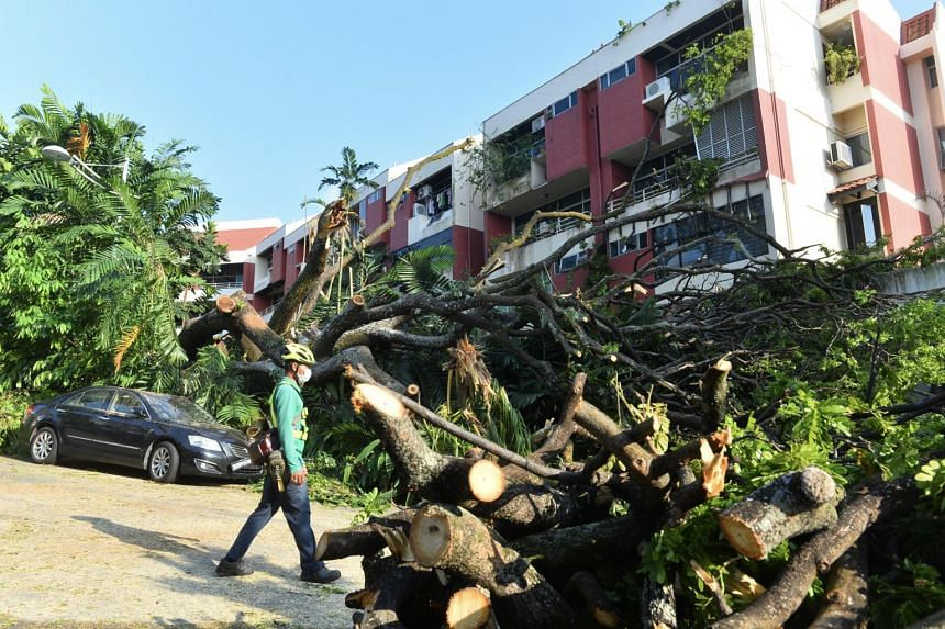 The falling rain tree damaged at least three units and two cars.