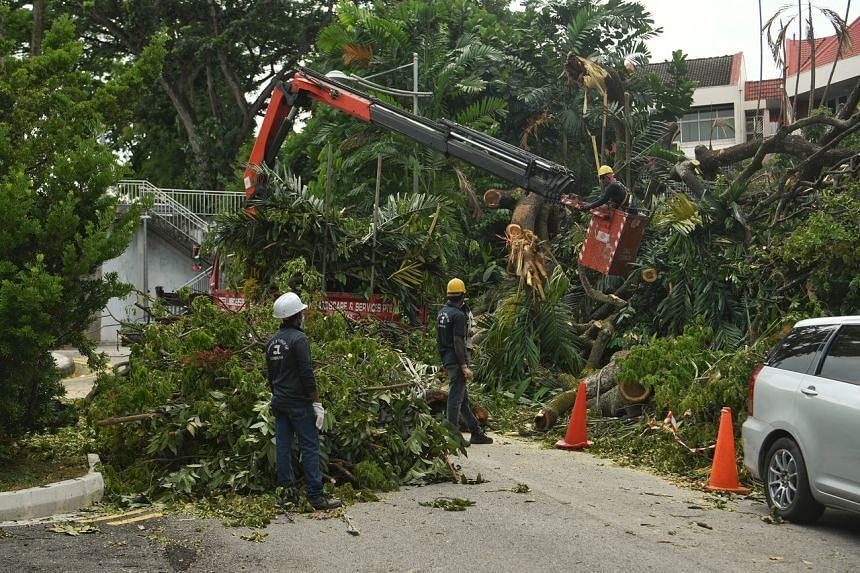 Contractors clearing the fallen tree at Kismis Court.