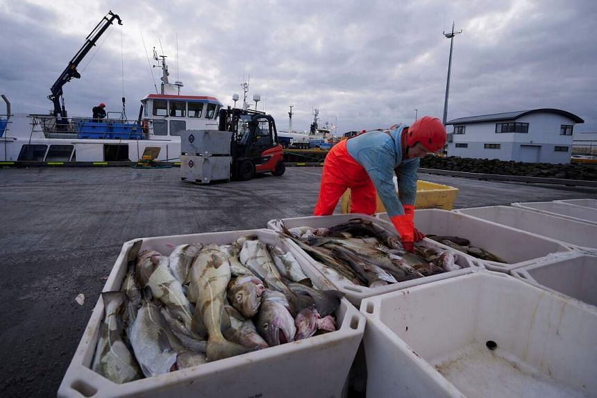 The fishing port of Grindavik has been under increased surveillance due to an unusual number of smaller tremors since the quake on Feb 24.
