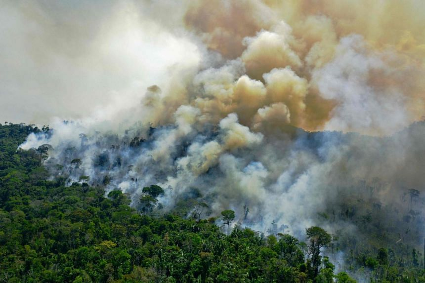 More than half of the destruction since 2002 has been in South America's Amazon and bordering rainforests.