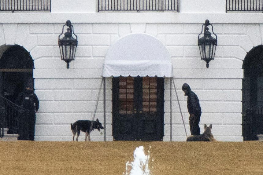 The episode was seen as serious enough for both dogs to be returned to Mr Joe Bidens' home in Wilmington last week.