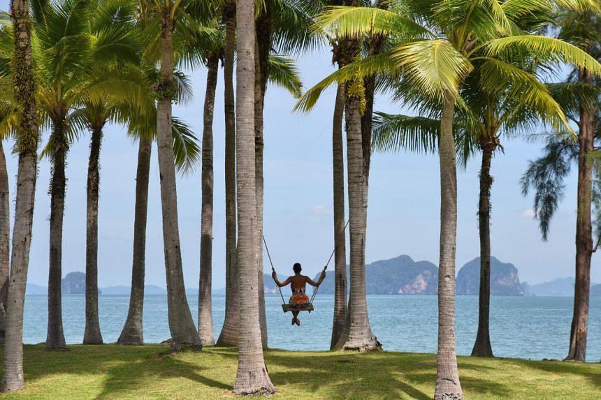 The serene coastal environment of Krabi.