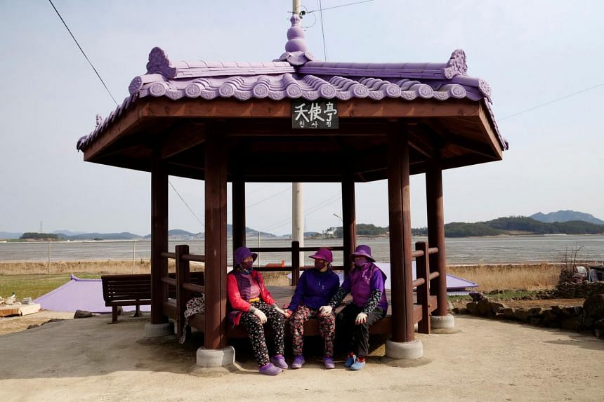 Since 2015, Shinan county has invested 4.8 billion won (S$5.68 million) to turn the islands purple.