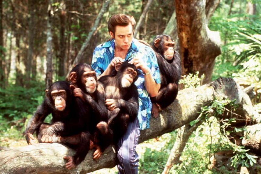 A still of Ace Ventura: When Nature Calls starring Jim Carrey.