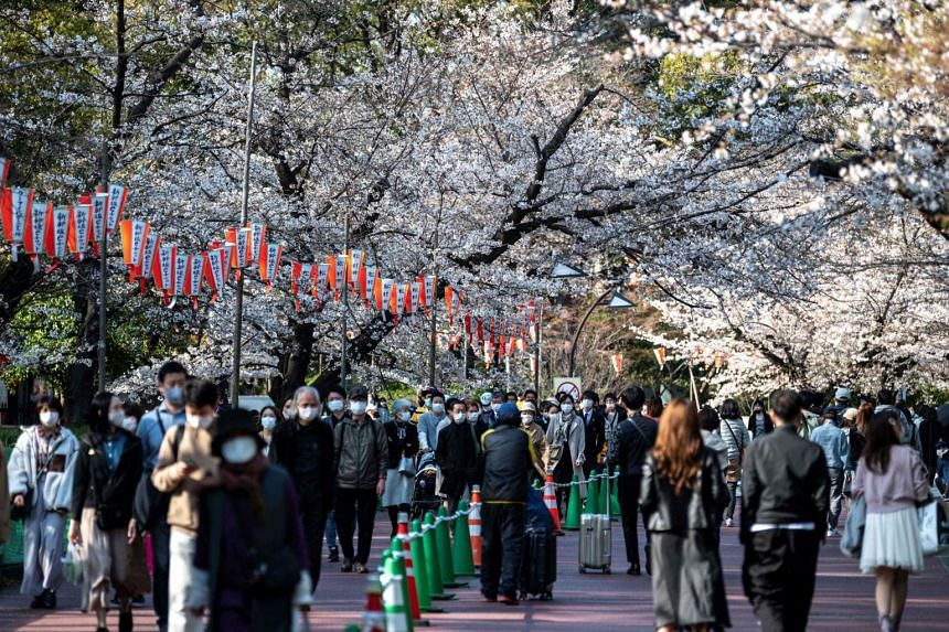 People stroll under cherry blossoms at a park in Tokyo, on March 23, 2021.