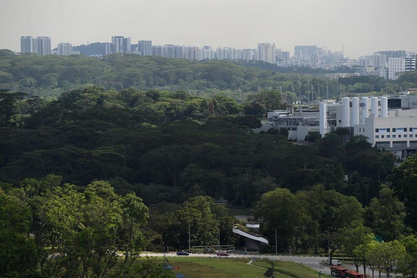 Urban forests can help to reduce a city's carbon footprint by up to 25 per cent, according to an NUS study of 7,500 cities.