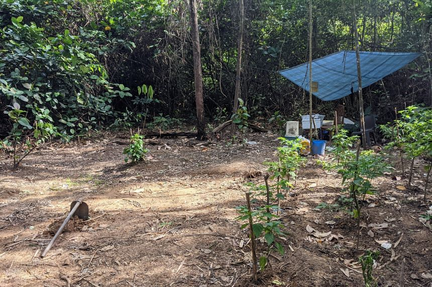 The Housing Board said it conducts regular inspections on state land it manages, including the site at Bukit Batok (pictured).