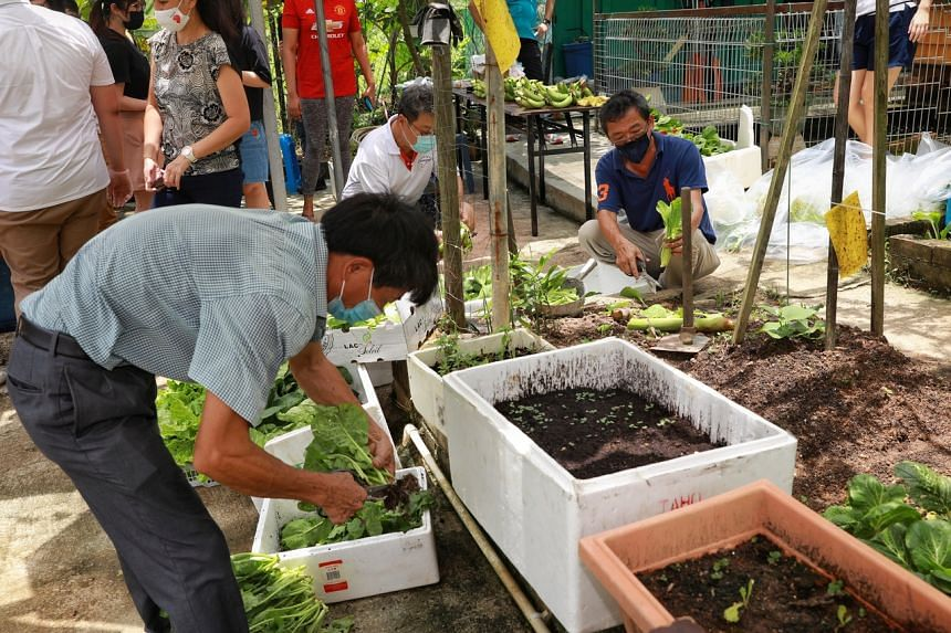 Volunteers sorting and packing vegetables from the community garden at Penaga Place for distributing to low-income residents on March 28, 2021.