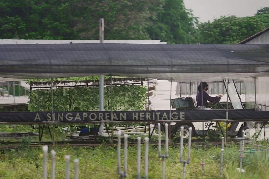 Oh Chin Huat Hydroponics Farm had over 200 greenhouses growing more than 15 types of vegetables and herbs. The farm closed its doors on June 30, 2020.