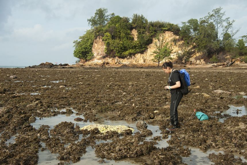 Dr Neo Mei Lin conducting field surveys of giant clams at Pulau Biola, located at the southern extremities of Singapore's southern islands, in 2010.