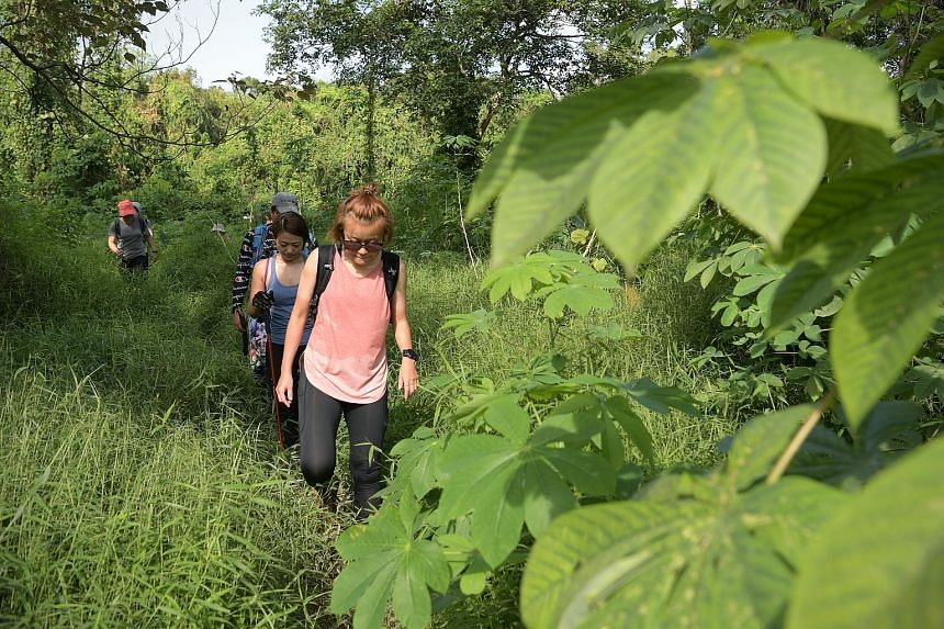 Veteran hikers and nature guides said unofficial routes in Clementi Forest and Dover Forest have grown more packed and pronounced.