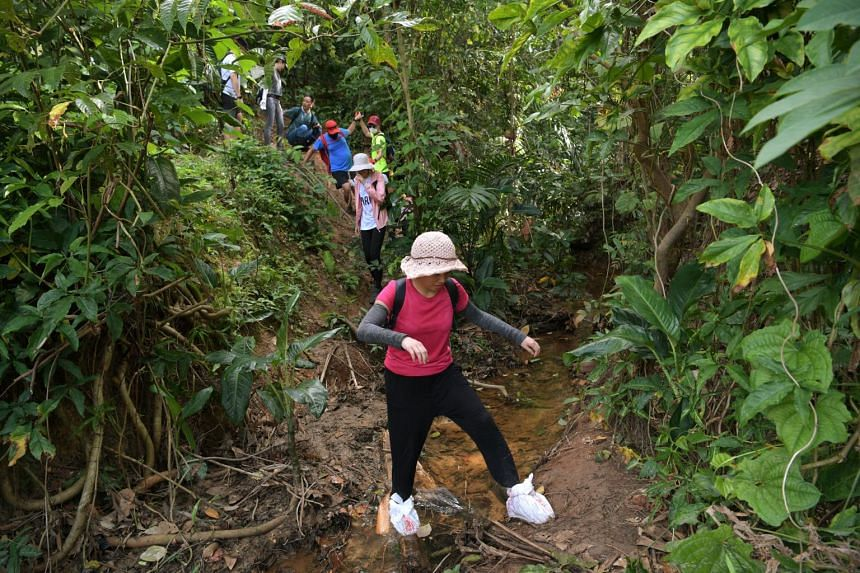 Hikers exploring Clementi Forest on April 2, 2021.