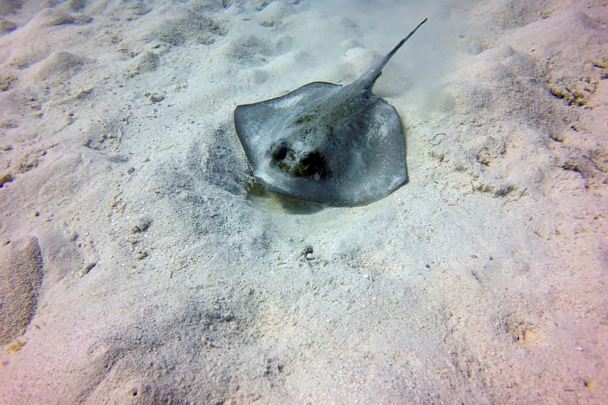People should be more mindful when stepping into the water and avoid going too close to where stingrays may be hiding.