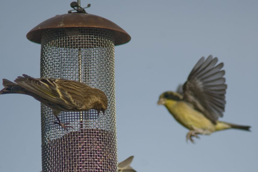 To prevent further cases, the CDC recommends cleaning bird feeders and bird baths once a week or when they are dirty.