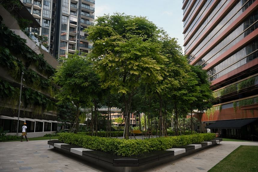 Singapore's Green Plan 2030's ambitions include planting a million more trees across the island.