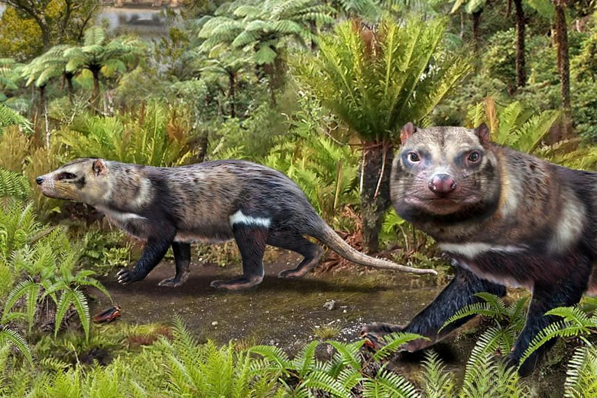 Christened Orretherium tzen is thought to have lived between 72 and 74 million years ago during the Upper Cretaceous period.