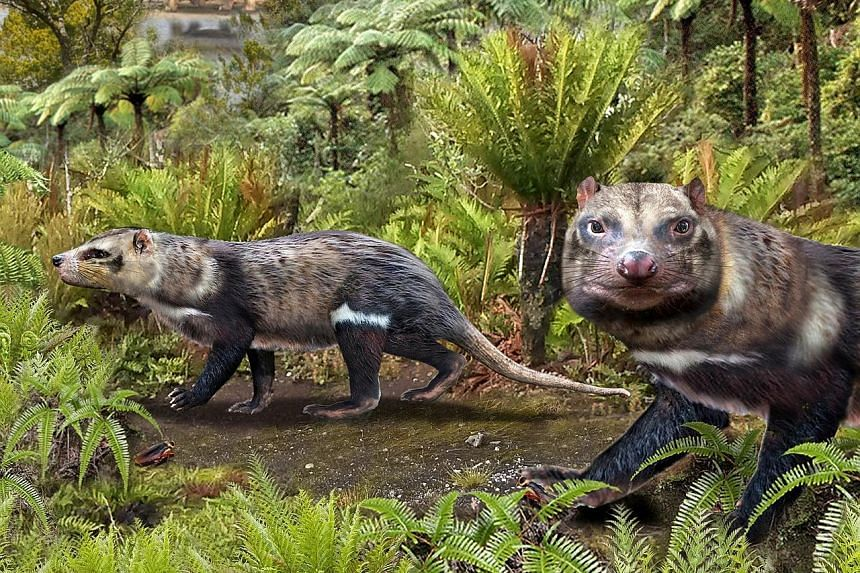 An artist's impression supplied by the Chilean Antarctic Institute showing the mammal christened Orretherium tzen, or Beast of Five Teeth.