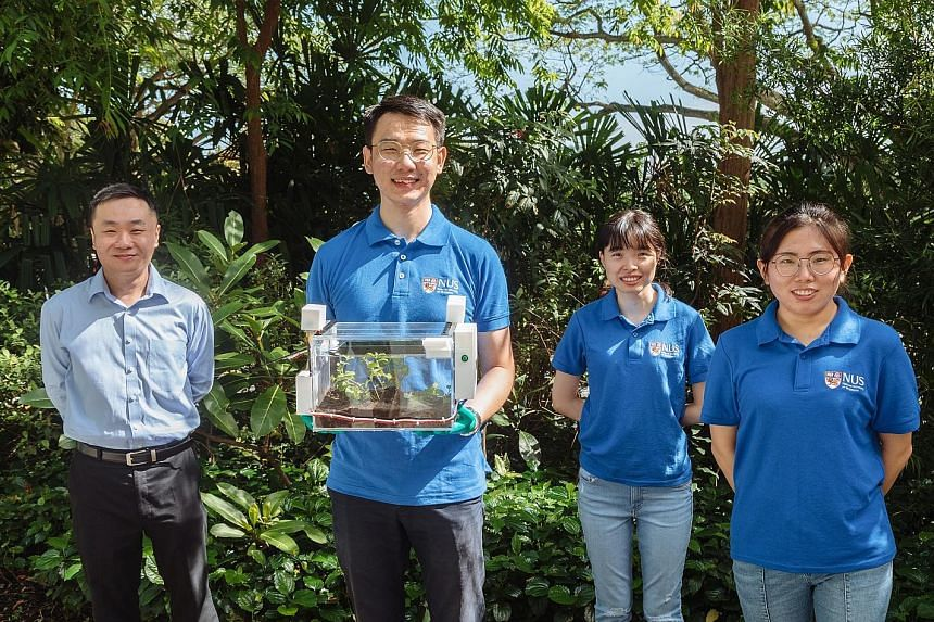 A research team led by Assistant Professor Tan Swee Ching (left) from NUS' Department of Materials Science and Engineering has created SmartFarm - a self-contained farming system which uses a new hydrogel as its main technology. The team members are