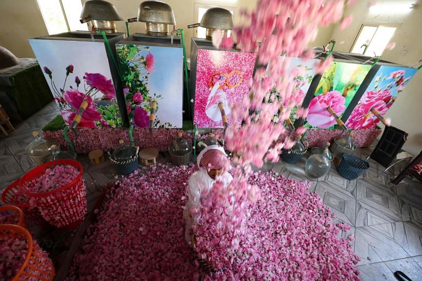 A worker at the Bin Salman farm tosses freshly picked Damascena (Damask) roses in the air, used to produce rose water and oil.