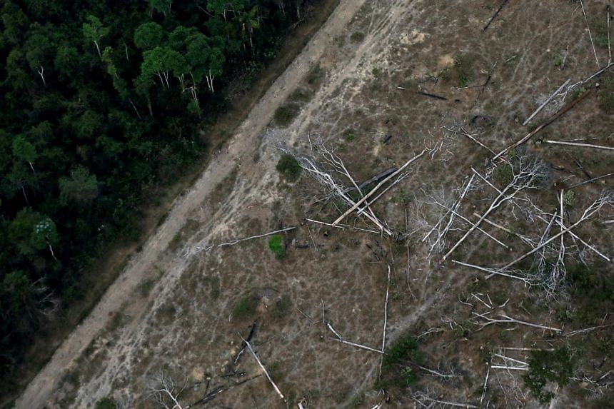In the 12 months to August 2020, deforestation in the Brazilian Amazon increased 9.5 per cent.