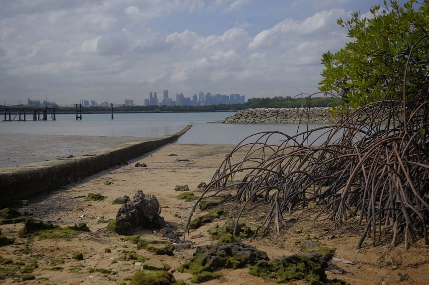 Mangroves buffer the coastline from major storm events.