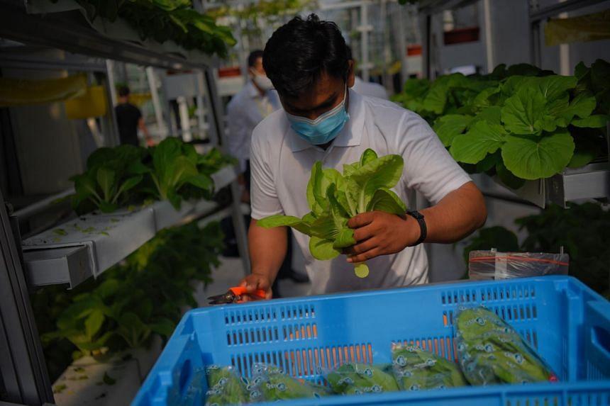SFA chief executive Lim Kok Thai said the world is facing challenges impacting global food security.