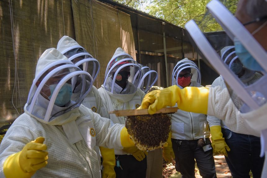 Origin Exterminators' employees learning how to handle a honeycomb - a structure made by bees for holding their honey and eggs - under the supervision of Mr Chong (right) at Bee Amazed Garden.