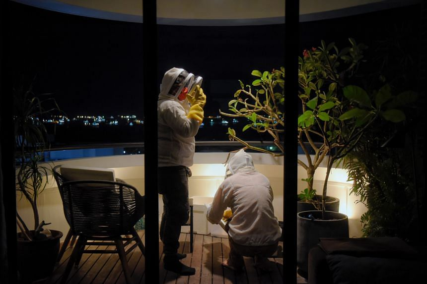 Origin Exterminators' pest control technician Muhammad Nuridzuan Jami (left) and Mr John Chong, founder of Bee Amazed Garden, putting on protective gear before removing a beehive from a tree on the balcony of an apartment in Marine Parade this month
