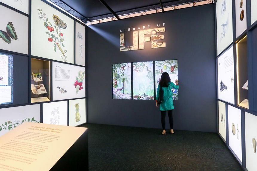 The National Library's latest exhibition is a detailed survey on Singapore's natural history.