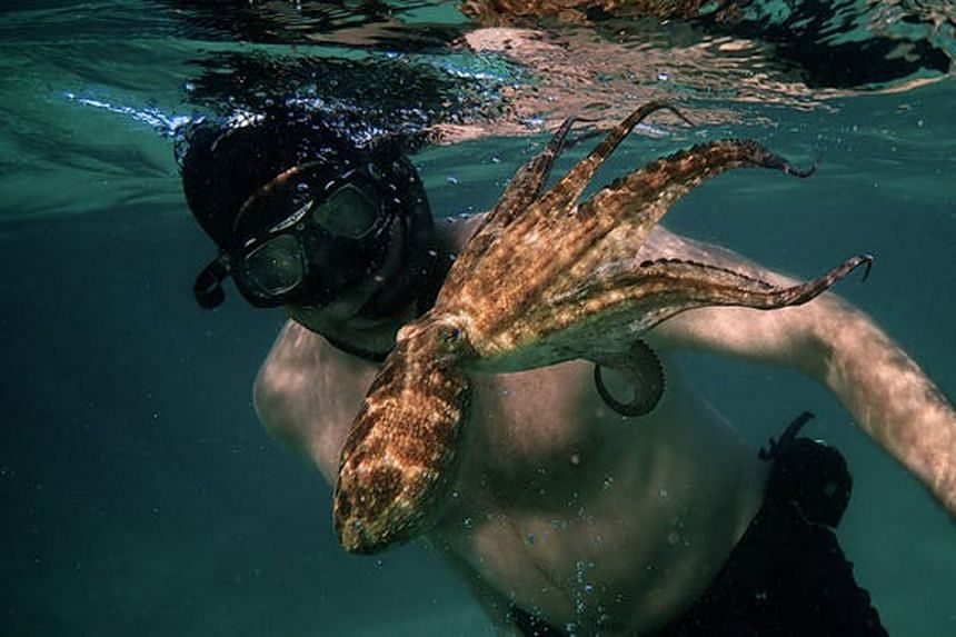 On Netflix, there is My Octopus Teacher (above, G, 85 minutes), winner of Best Documentary Feature. It tells the story of diver and film-maker Craig Foster and his bond with a curious octopus he meets in the kelp forests off the coast of South Africa
