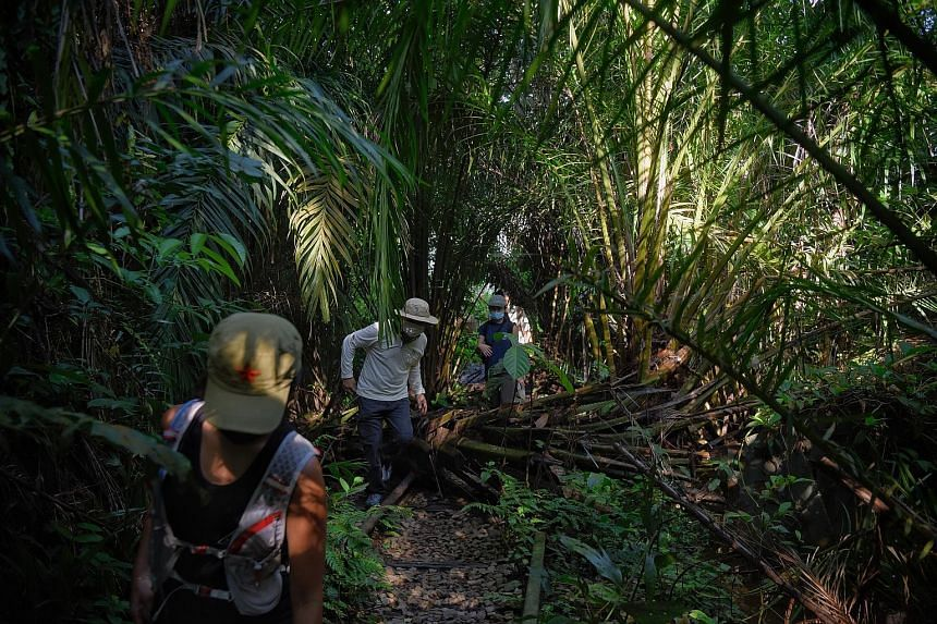 Researchers looking for the two rare orchids in Clementi Forest last week.